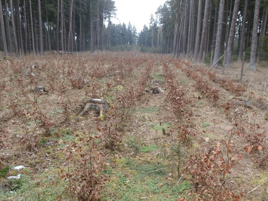 Zalesňování