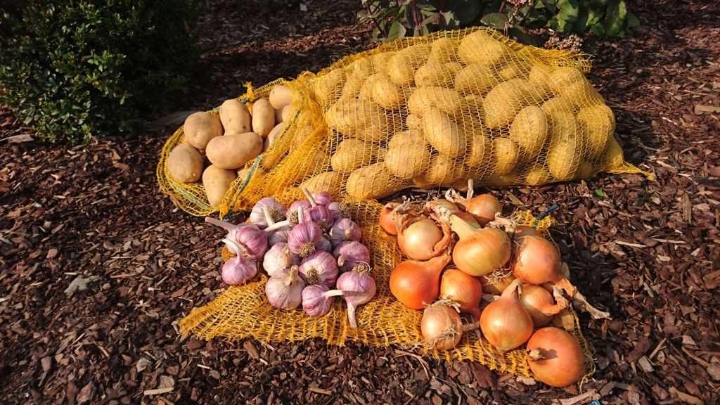 Český česnek, cibule a brambory na uskladnění